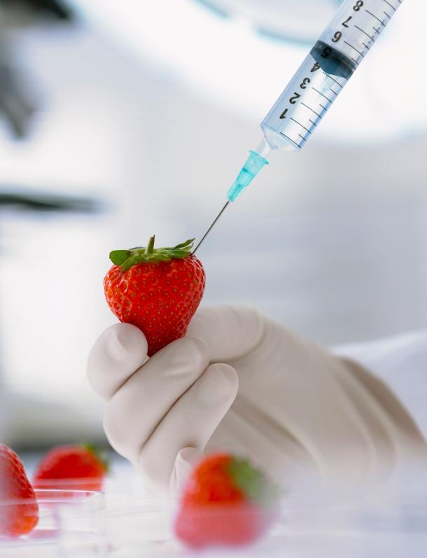 gmo strawberry