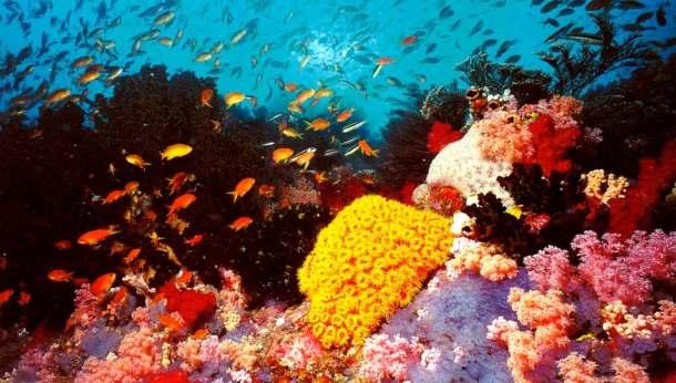 australia-e28093-the-great-barrier-reef-2-jpg