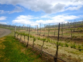 Wine Weekend in Walla Walla,Washington
